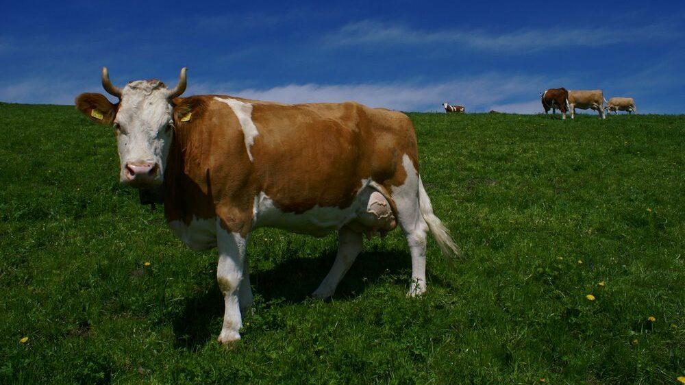 Energie-Effizienz-Förderprogramm Milch